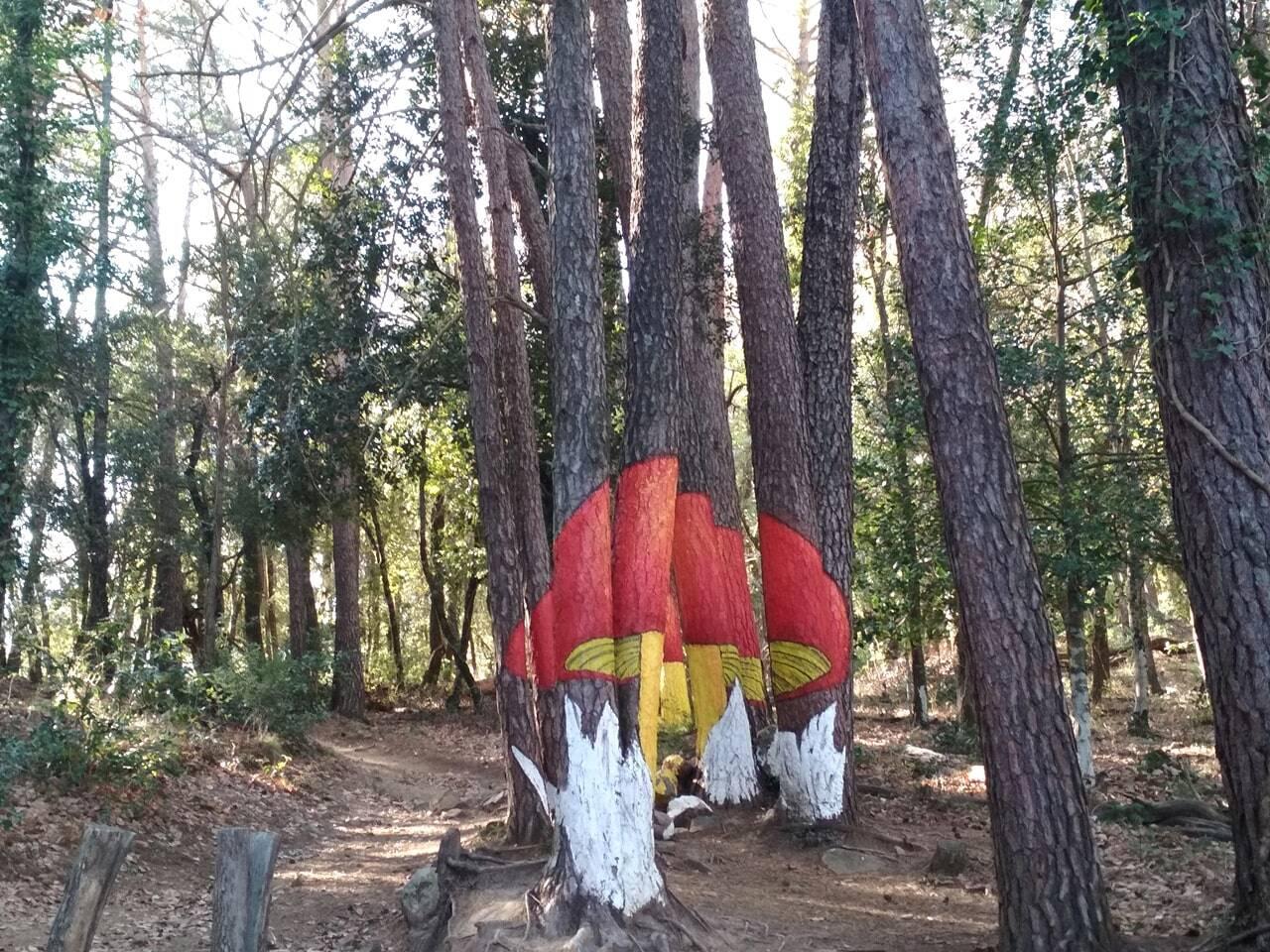 ruta micologica bosque de poblet