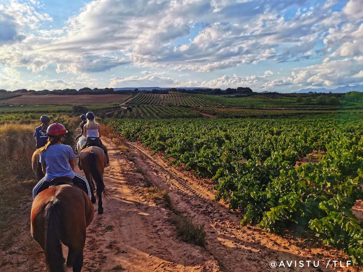 Enoturismo paseando a caballo por La Rioja